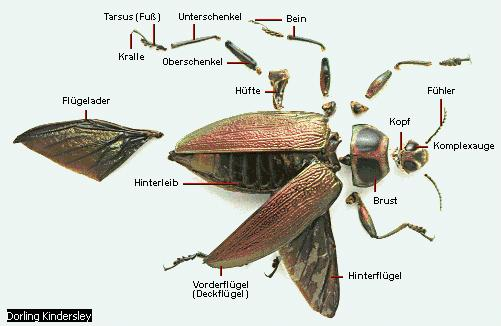 Insekten unter dem mikroskop